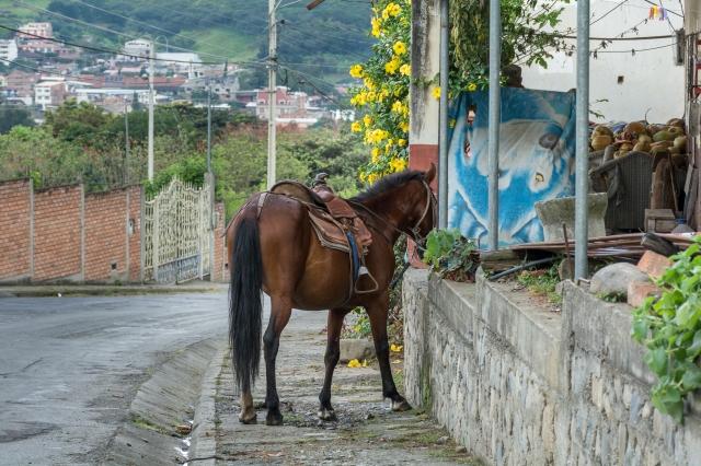 Blog Vilcabamba-15
