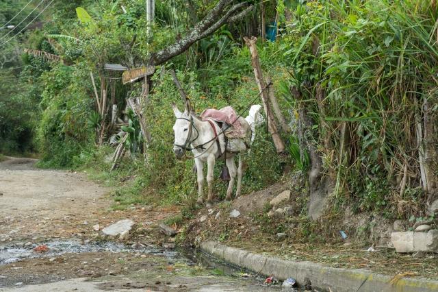 Blog Vilcabamba-17